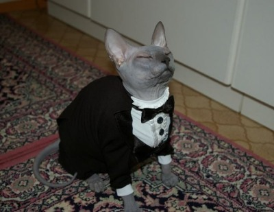 tinyredbird:  burgersnacks:  i be on my suit and tie  come to my house let me kiss your head