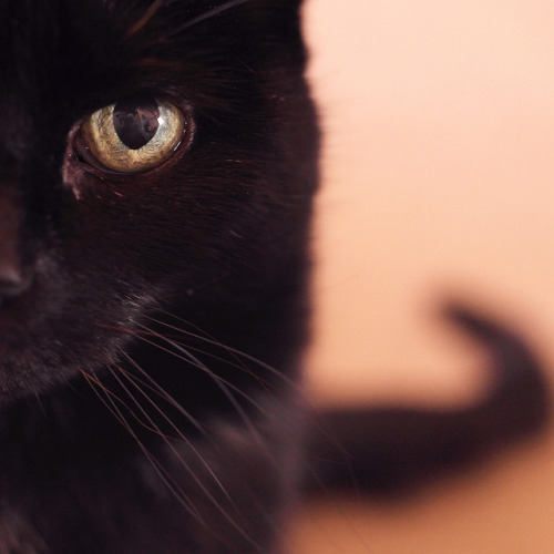 catp0rn:  Another square Sammy on Flickr