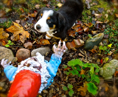 the pup and the zombie gnome meet