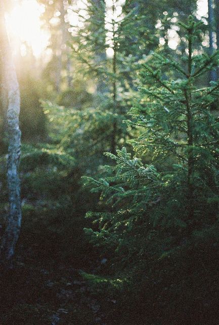 jah-feel:  aphelia:  Going out to get my tree by beechen green on Flickr.  Lovely