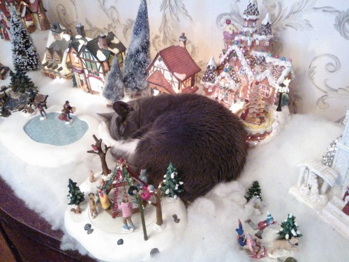 Get out of there cat you are not a villager celebrating christmas