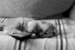 kitty cat cute adorable kitten nm
