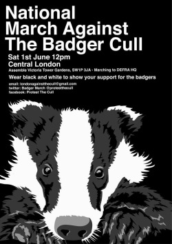 WTF is going on, why are they killing the badgers? :(