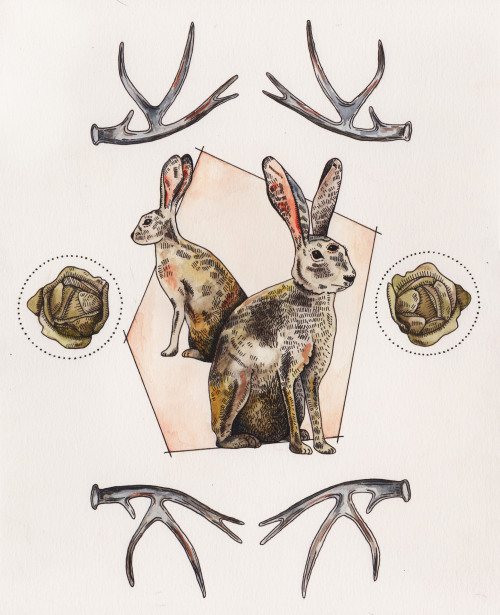jackalope//pen & ink and watercolor//2013