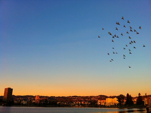 for the birds…lake merritt