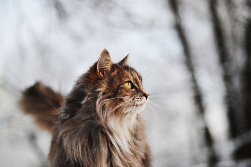 photogenicfelines:  (Pearx3)