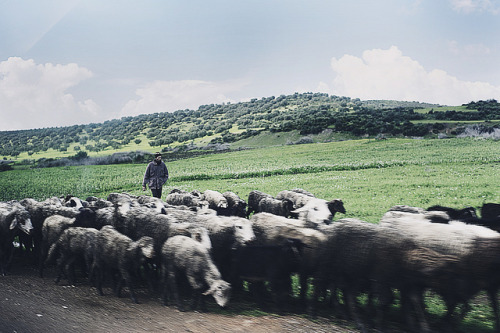 greekg0ds:  shepherd by cherry bharati
