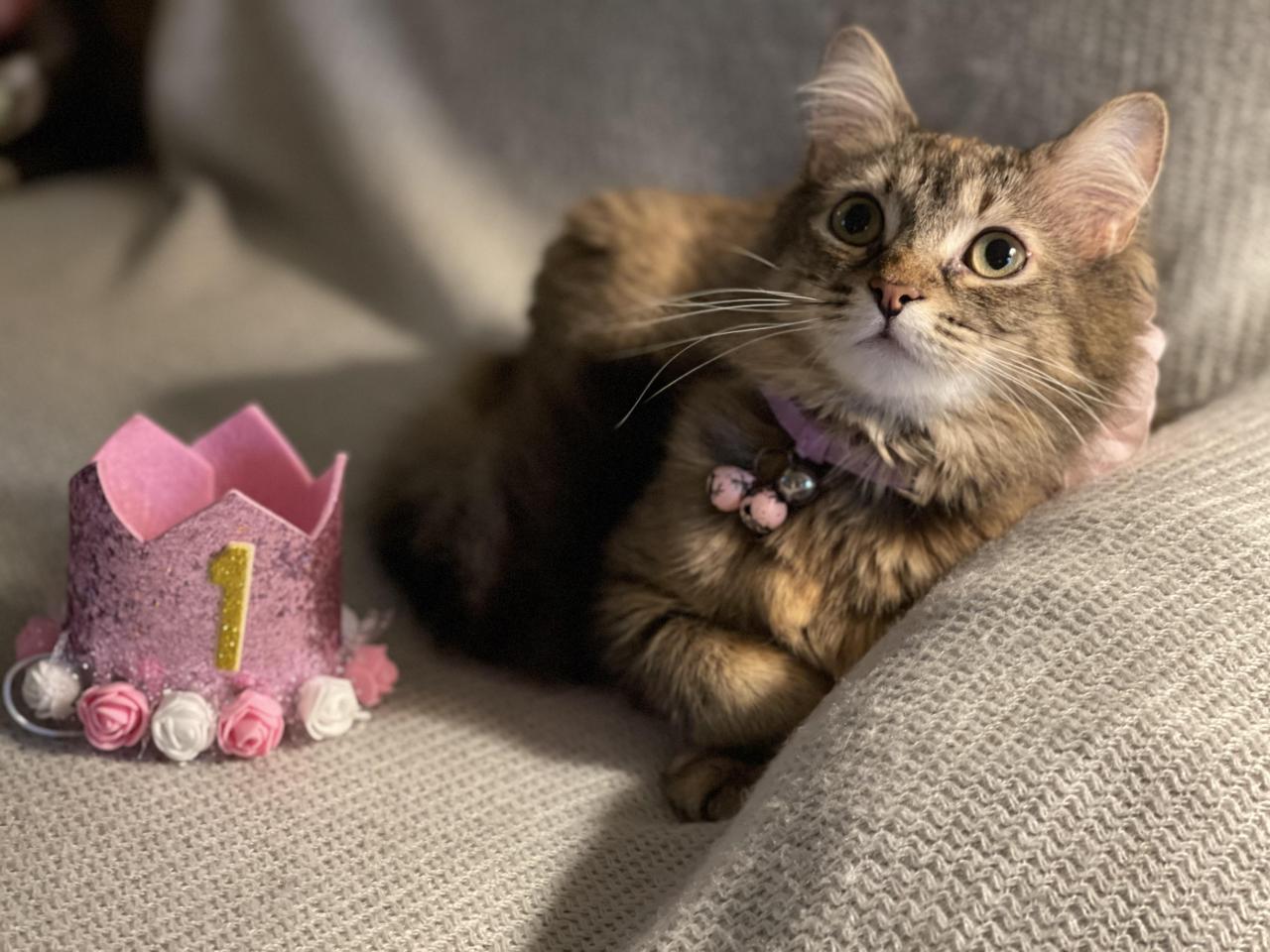 #CatYeahhh#cats#funny#cat#kitty#kitten