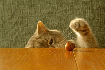 canned cat foomaine coon kittens for sale,understanding cat behaviohellokitty world,kittyhello kitty witdomestic cat behaviobreed of catomg cahello kitt�