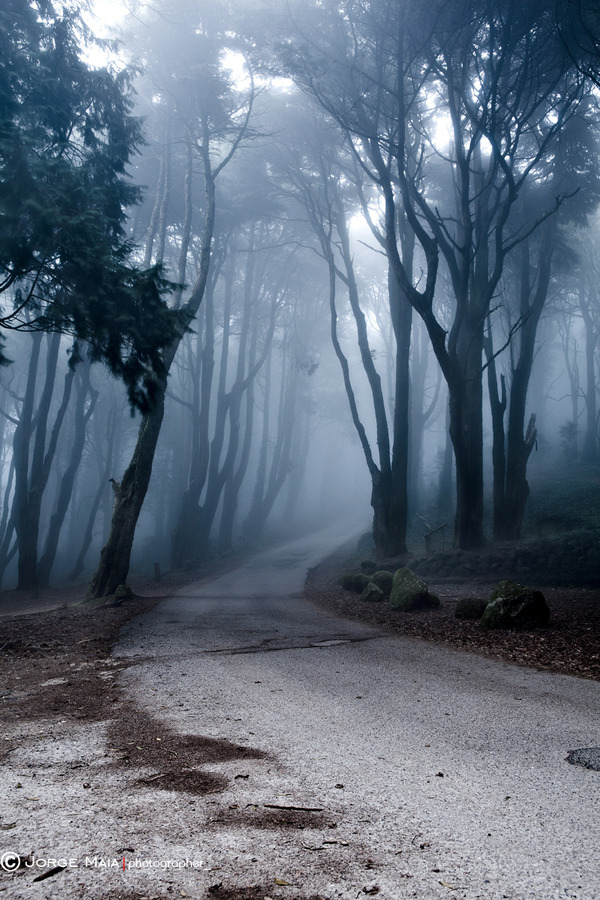 the-absolute-best-photography:  llbwwb:Last Road by Jorge Maia.   You have to follow this blog, it's really awesome!