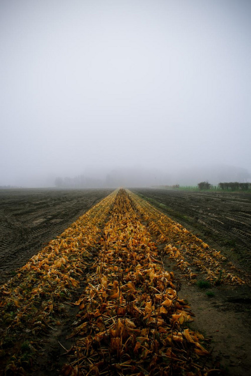 theoceanrolls:  (by a frost on the barley)