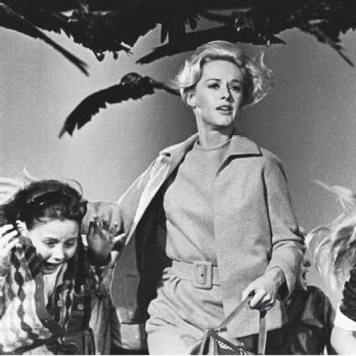 This film is all sorts of genius. #thebirds #alfredhitchcock #film #tippihedren