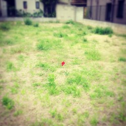 紅い花 #flower #red #green