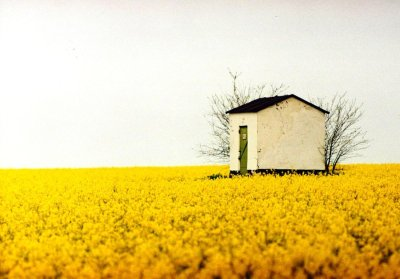 sweetlysurreal:  tranquility in yellow by ~sharktooth