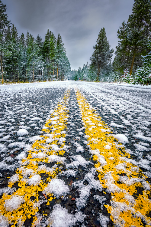 tulipnight:  Snow-Covered Road in Yellowstone National Park by dfikar on Flickr. Roadway in front of Yellowstone Lake Hotel after an early snowfall in September
