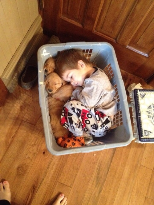 luckyra88it:  awwww-cute:  Little guy fell asleep in a basket with his golden retriever puppies  how the fuck is it legal for something to be this many levels of cute.