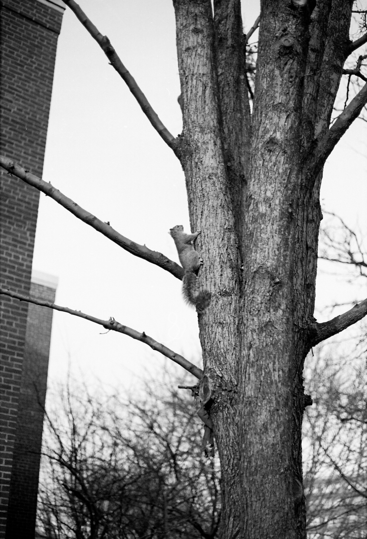 squirrel 35mm