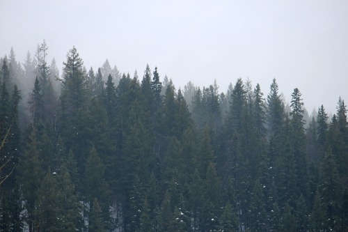 flyingorcas909:  Mist is my favourite. <3