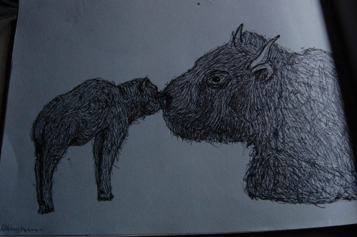 fingersandfelines:  a bison and calf i drew in 2011
