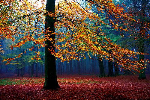 Jesen - fotografije - Page 14 Tumblr_mtk1asQNSx1qdhbk1o7_r1_500