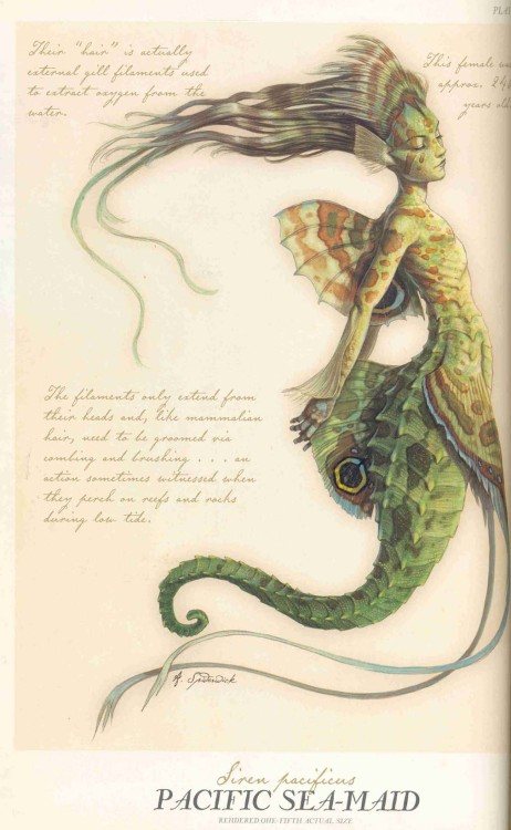 owls-love-tea:  Mermaid and Sea-maid from Arthur Spiderwick's Field Guide to the Fantastical World