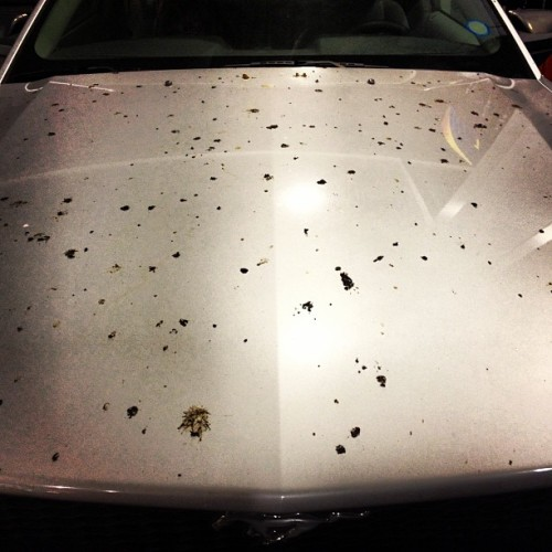 The Bird Shit Apocalypse: Ain't Karma A Bitch? (at Sunoco)