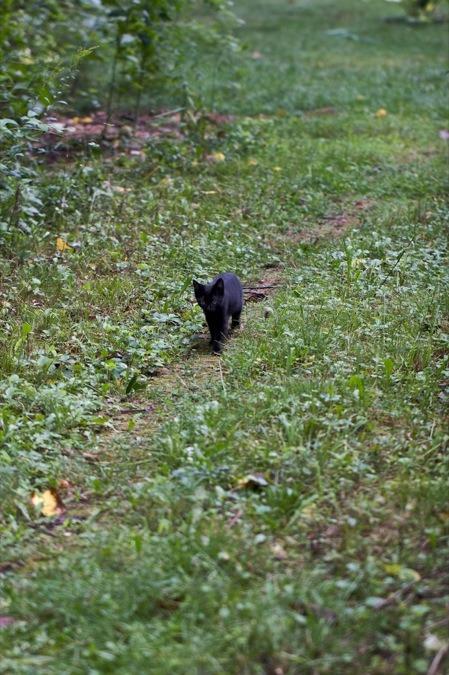 aniimals kitten black kitten path heyfiki post my favorites
