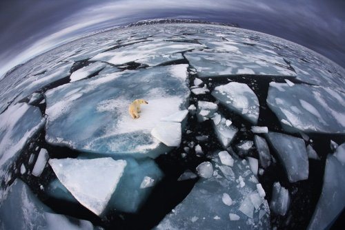 "alittledirtneverhurt:  ""Scientists maintain that the melting of the ice will soon become a major problem for humans as well as polar bears, not just because of rising sea levels but also because increasing sea temperatures are affecting the weather, sea currents and fish stocks.""Read more: http://www.businessinsider.com/veolia-environment-wildlife-photographer-2012-10?op=1#ixzz2QmekMK37(Taken directly from the site)"