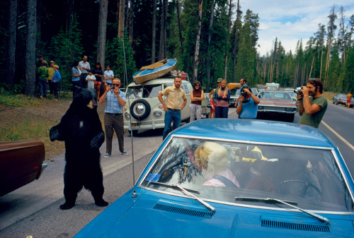 wandrlust:  Bear Jam, Wyoming, 1972 — Jonathan Blair