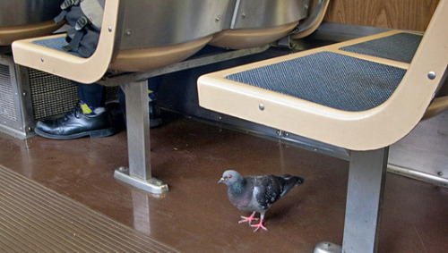Commuting critters: 6 animals that ride public transportation Whether they're in search of a snack or just along for the ride, these animals are boarding buses and trains across the globe.