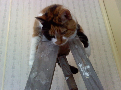 """No more painting, the ladder is mine!"" Via Imgur"
