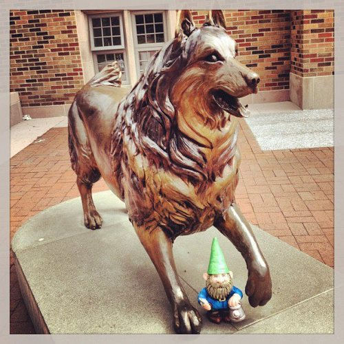 happyhenrythegnome:  Go Huskies! University of Washington