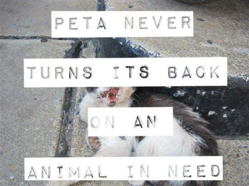 PETA is a shelter of last resort, meaning we take in sick, injured & dying animals that shelters often won't. PLEASE READ why we support euthanasia. WARNING: GRAPHIC PHOTOS - http://peta.vg/168