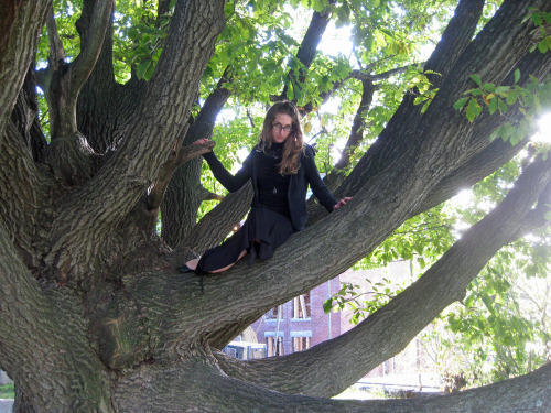 "awkwardmanifesto submitted this photo with the comment ""Up a tree in a cemetery in Salem, site of the witch trials."" Sir Bedevere: Tell me. What do you do with witches? Peasant: Burn them. Sir Bedevere: And what do you burn, apart from witches? Peasant: More witches!* Now that's out of my system, the cemetery in Salem is a nice story 'n all but where is the proof? I see no gravestones and I see no witches hanging from the trees (too gory? I blame it on the Songs of Fire and Ice books).  She is, however, high up an impressive tree and she's not smiling. It's a sunny day but she's in the shade.  I just can't bring myself to give her bonus points for the cemetery or Salem business due to lack of evidence. 4.4 out of 5 - She turned me into a newt… but I got better  * I'm appalled by the amount of people who don't know that this is from Monty Python's Holy Grail. *sigh*"
