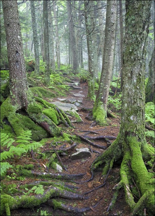 unwrittennature:  Appalachain Trail Mt Stratton, Vermont by. Patrick Zephyr Nature Photography