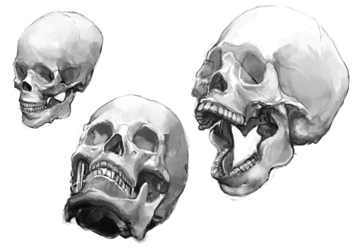 luutantti:  Painted some skulls from this reference in order to do something about my terrible facial proportions. It was more fun than I thought it would be!