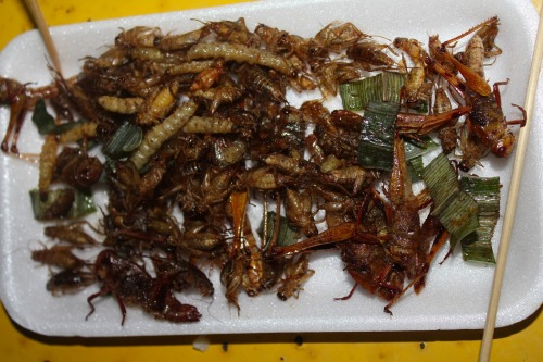 Ok - so now the UN is telling us to start eating bugs…