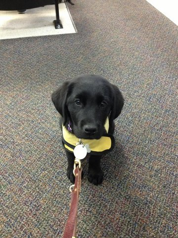 An Update from Luther the Guide Dog in Training Even though I'm just a baby, I'm doing a great job learning to sit quietly in class at the University of Georgia with my puppy raiser!