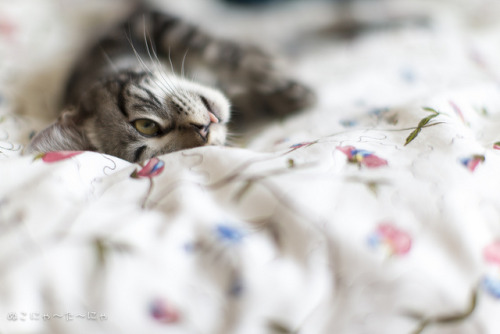 catp0rn:  Sleepy on Flickr