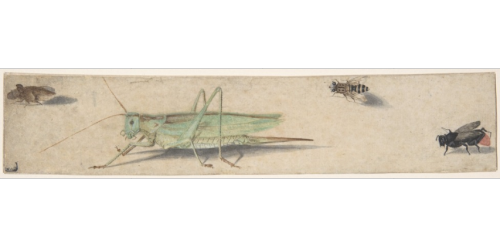 yama-bato:  inA Katydid, a Fly, a Bee, and a Fulgoroid Anonymous, Dutch, 17th century  Former Attribution: Formerly attributed to Anonymous, Netherlandish, 16th century Former Attribution: Formerly attributed to Joris Hoefnagel (Netherlandish, Antwerp 1542–1601 Vienna)