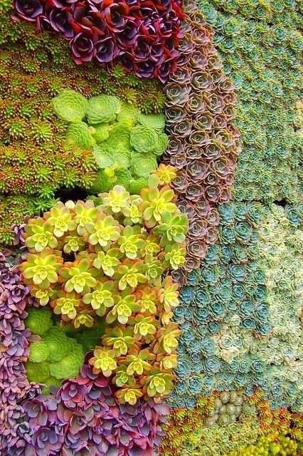 violentcraving:  wall of succulents