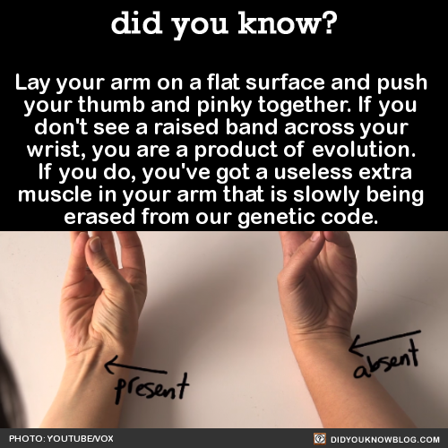 did-you-kno-lay-your-arm-on-a-flat-surface-and