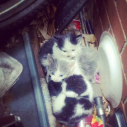 My kittens lol my cat put them in the worse place possible but they are laying on the little black one