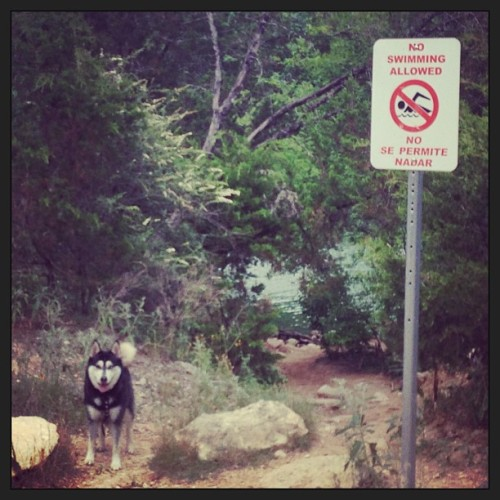 Outlaw dog! (at Red Bud Isle)