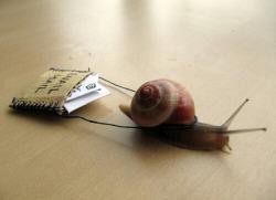 snail snails im dead
