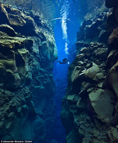 This amazing photograph shows a diver in the gap between two tectonic plates. Scuba diver Alex Mustard dove 80 feet into the crevice between North America and Eurasia. The area is near Iceland and it's full of faults, volcanoes and hot springs caused by the plates gradually separating at a rate of about 1 inch a year. More stunning photos over at The Daily Mail. (via the always fantastic I Fucking Love Science)
