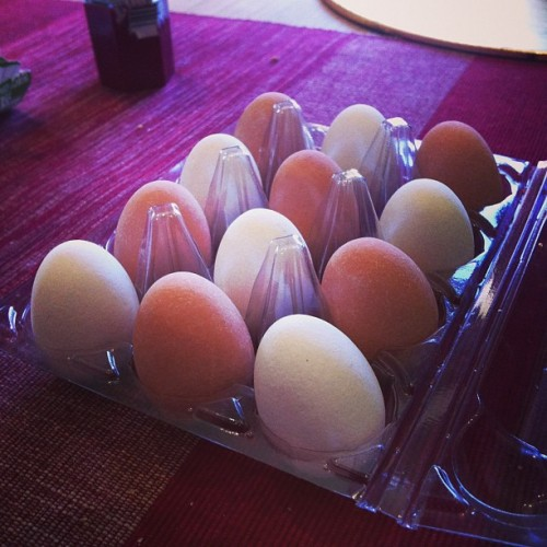 truffle eggs from windmill country