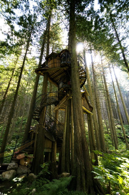 peachezisconfused:  Tree Houses.