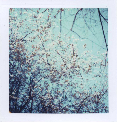 Blossom by gotnc on Flickr.