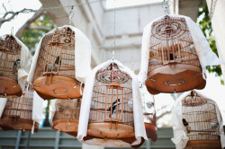 airudite:  beautiful birdcages by Celine Kim on Flickr.
